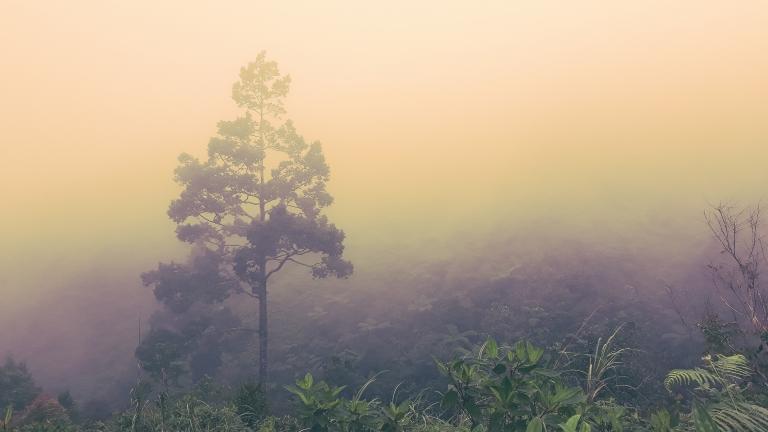 Foggy Lantawan