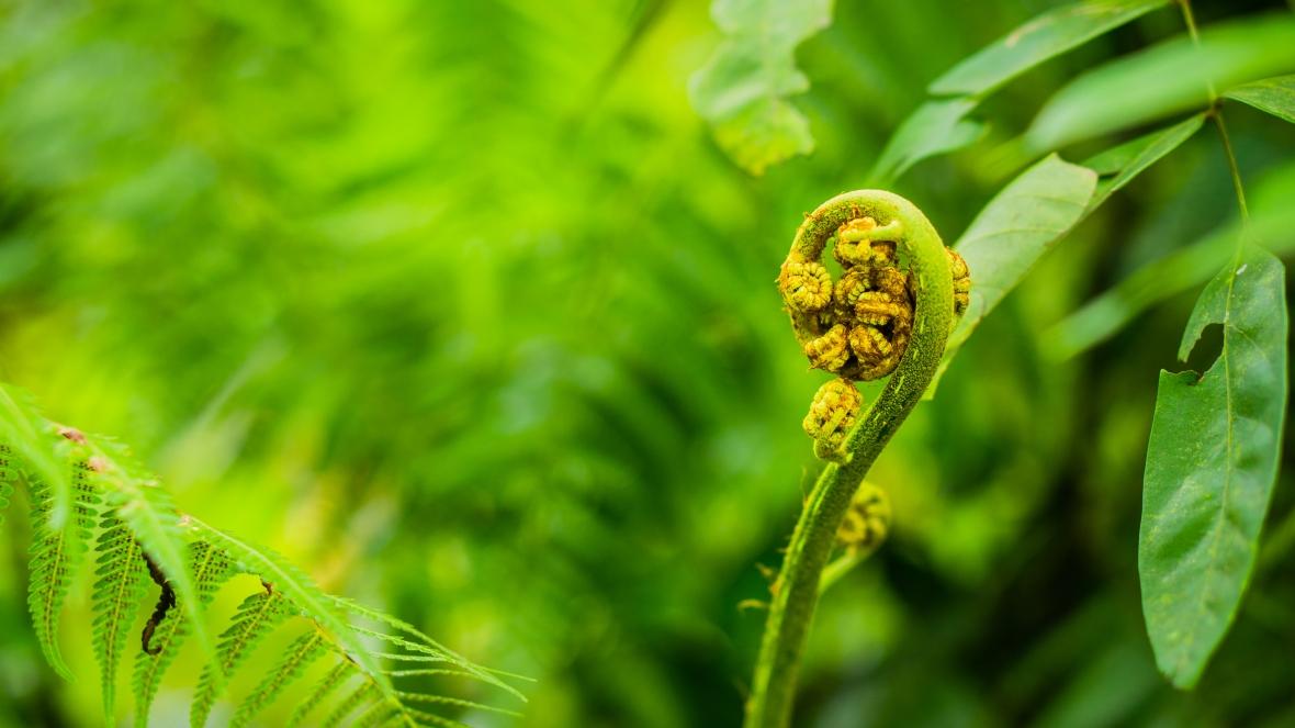 AmlanForestReserve-1-2